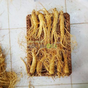 Sâm tươi Hàn Quốc 10 củ 1 kg
